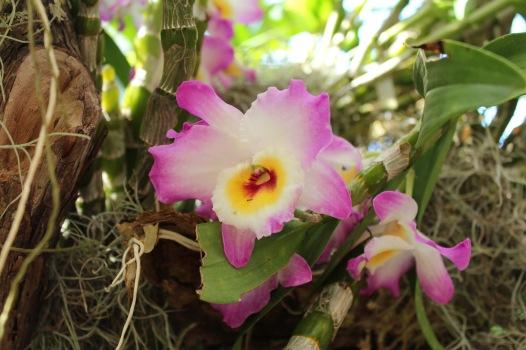 orchid1.jpg - 1