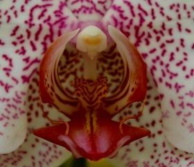 orchid10.jpg - 1