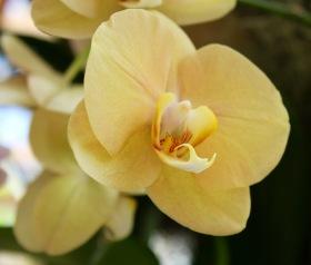 orchid12.jpg - 1