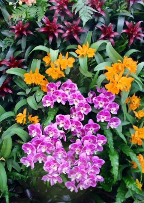 orchid13.jpg - 1