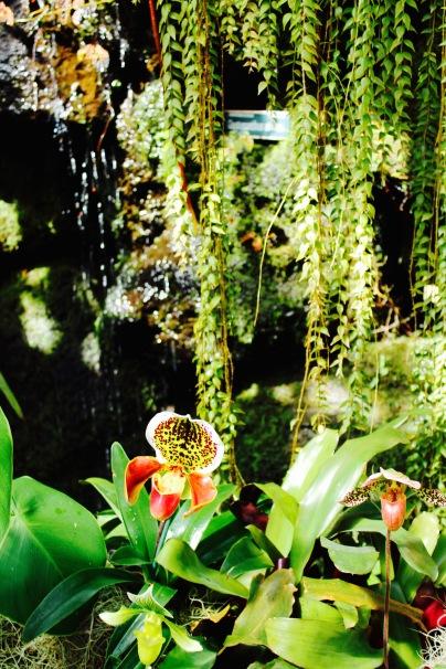 orchid14.jpg - 1