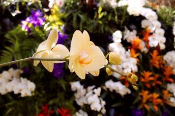 orchid16.jpg - 1