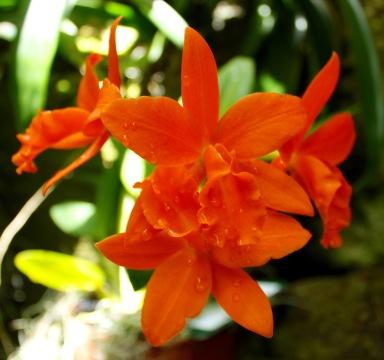 orchid17.jpg - 1