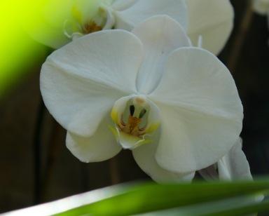 orchid18.jpg - 1