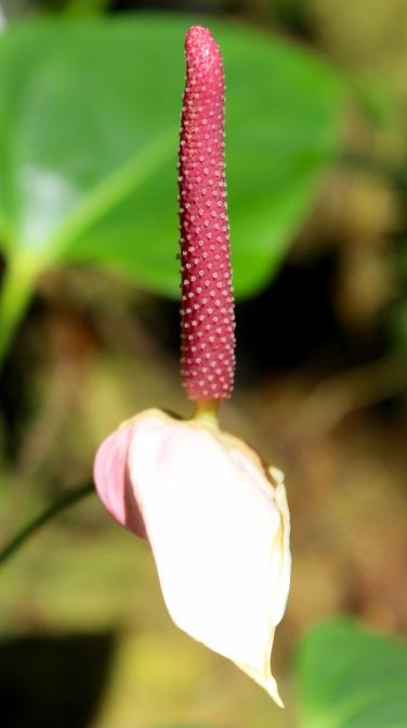 orchid19.jpg - 1