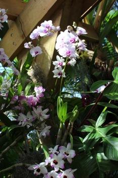 orchid2.jpg - 1