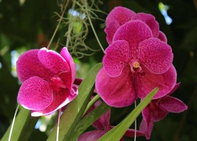 orchid6.jpg - 1
