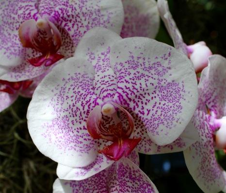 orchid8.jpg - 1