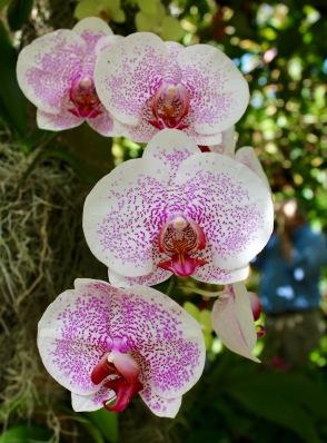 orchid9.jpg - 1