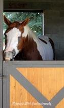 horse-w-teeth-1