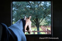 looking-out-back-of-barn-1