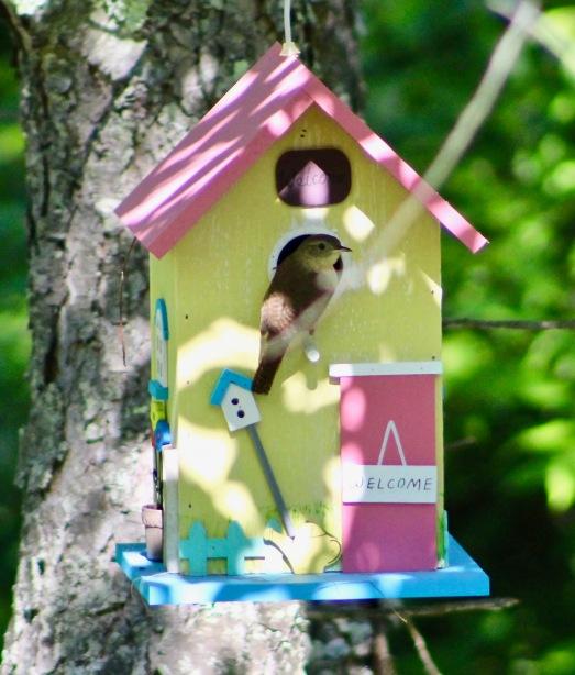 birds18.jpg - 1