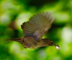 birds21.jpg - 1