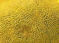 sunflowers.jpg - 9